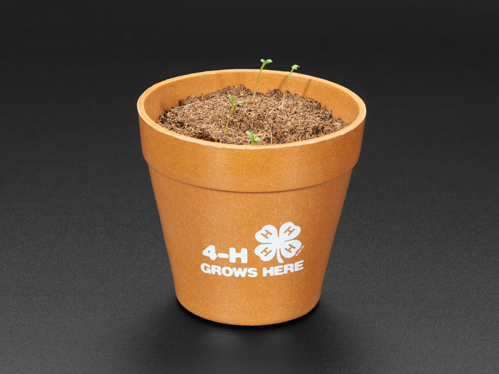 Planter with soil and small sprouts emerging