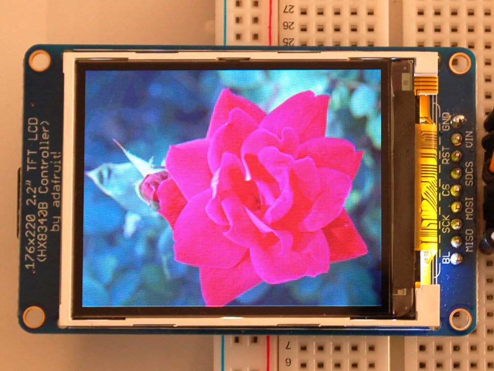 TFT showing image of rose