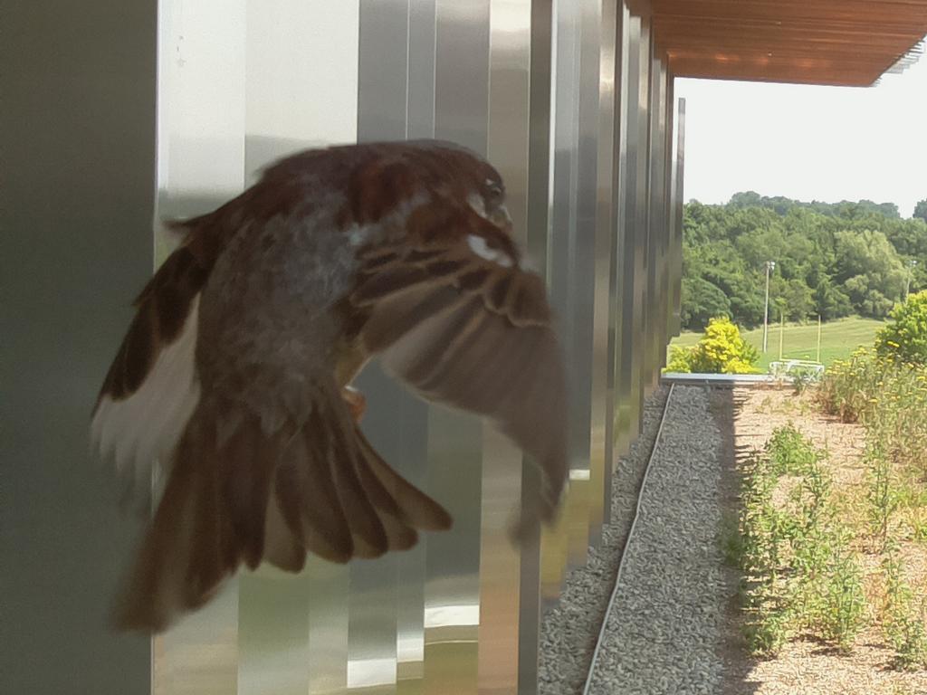 UTM Birdfeeder